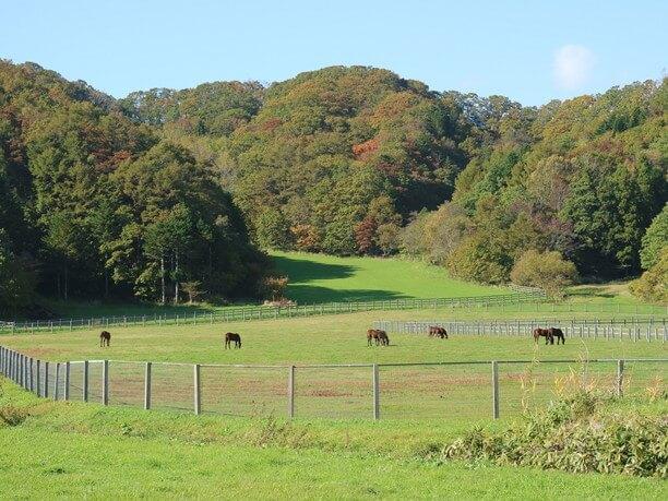 草原の馬たち