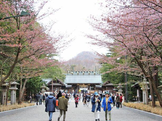 道沿いの桜