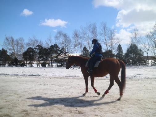 雪道の乗馬