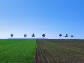 畑、緑と土