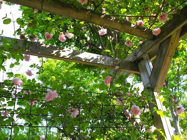 花に囲まれたようなバラのアーチ