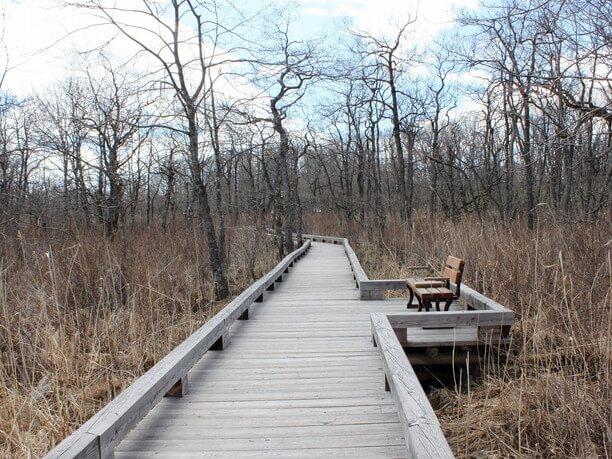 全長450メートルの木道散策路