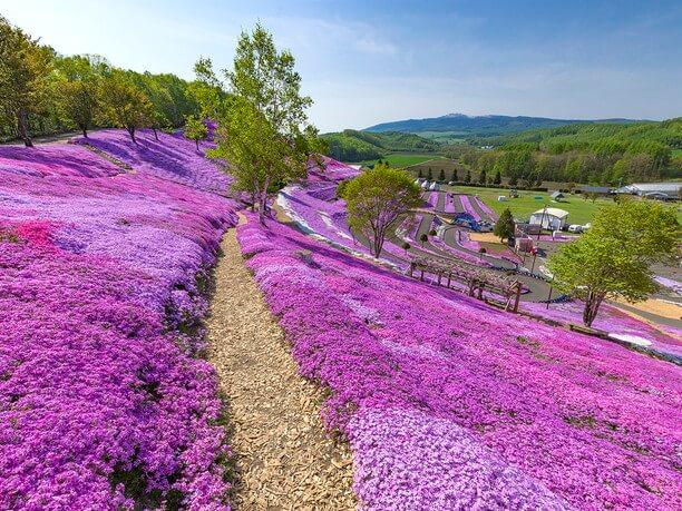 感動の絶景! 東藻琴芝桜公園