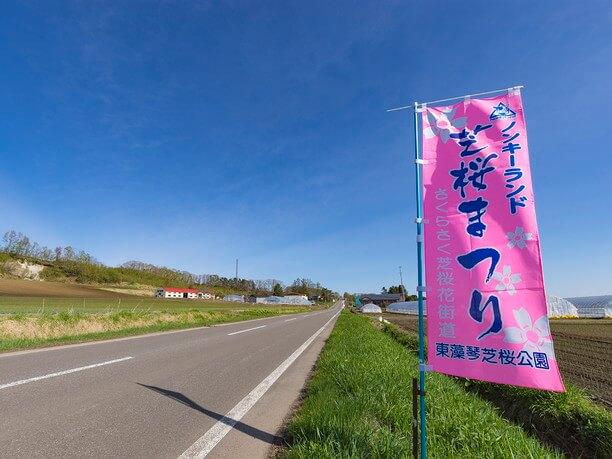 公園へと向かう道は別名「芝桜花街道」