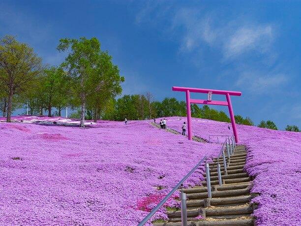 芝桜が咲き誇る斜面