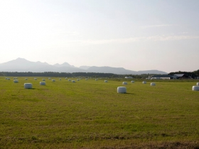 どこまでも続く牧草地帯