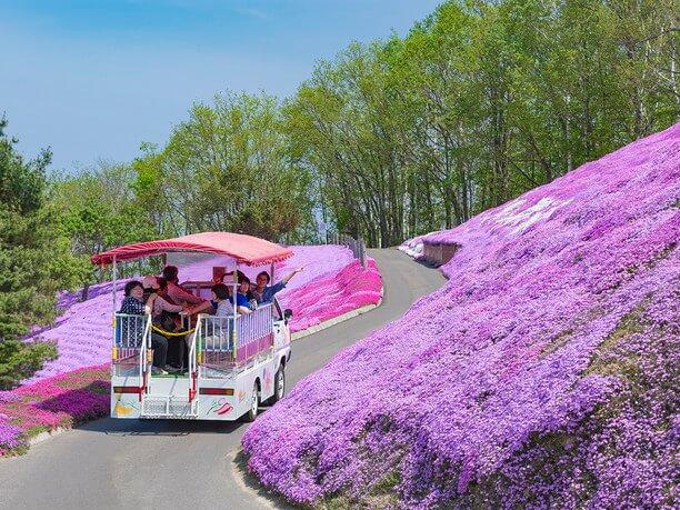 お花畑のなかの専用道を巡る遊覧車