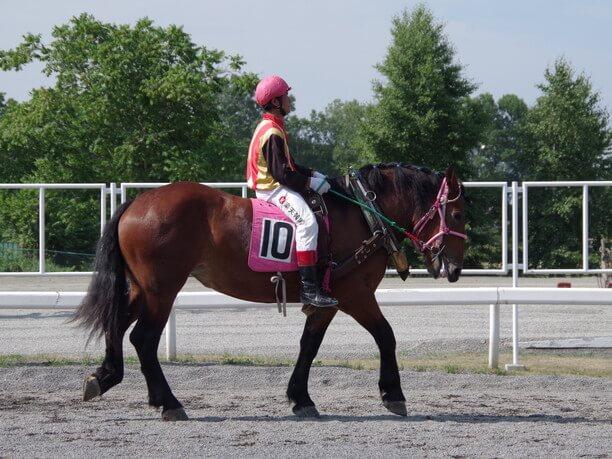 10番の馬