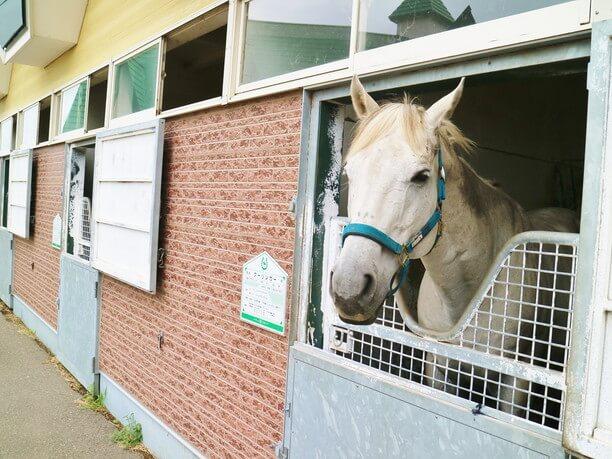 乗馬を楽しめる元競走馬