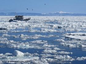 流氷と野鳥