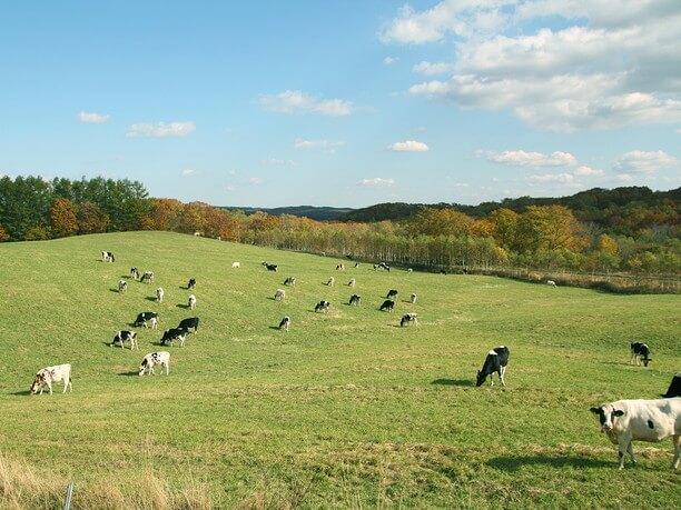 弟子屈町営牧場900草原は緑の絨毯とパノラマビュー!イメージ
