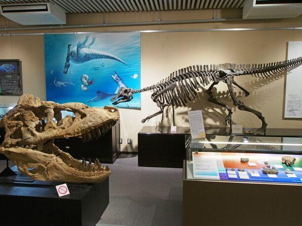 恐竜・古代生物の化石