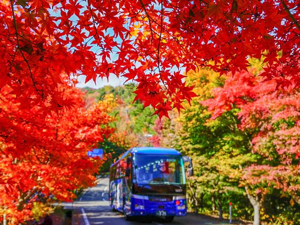 島めぐり観光バス