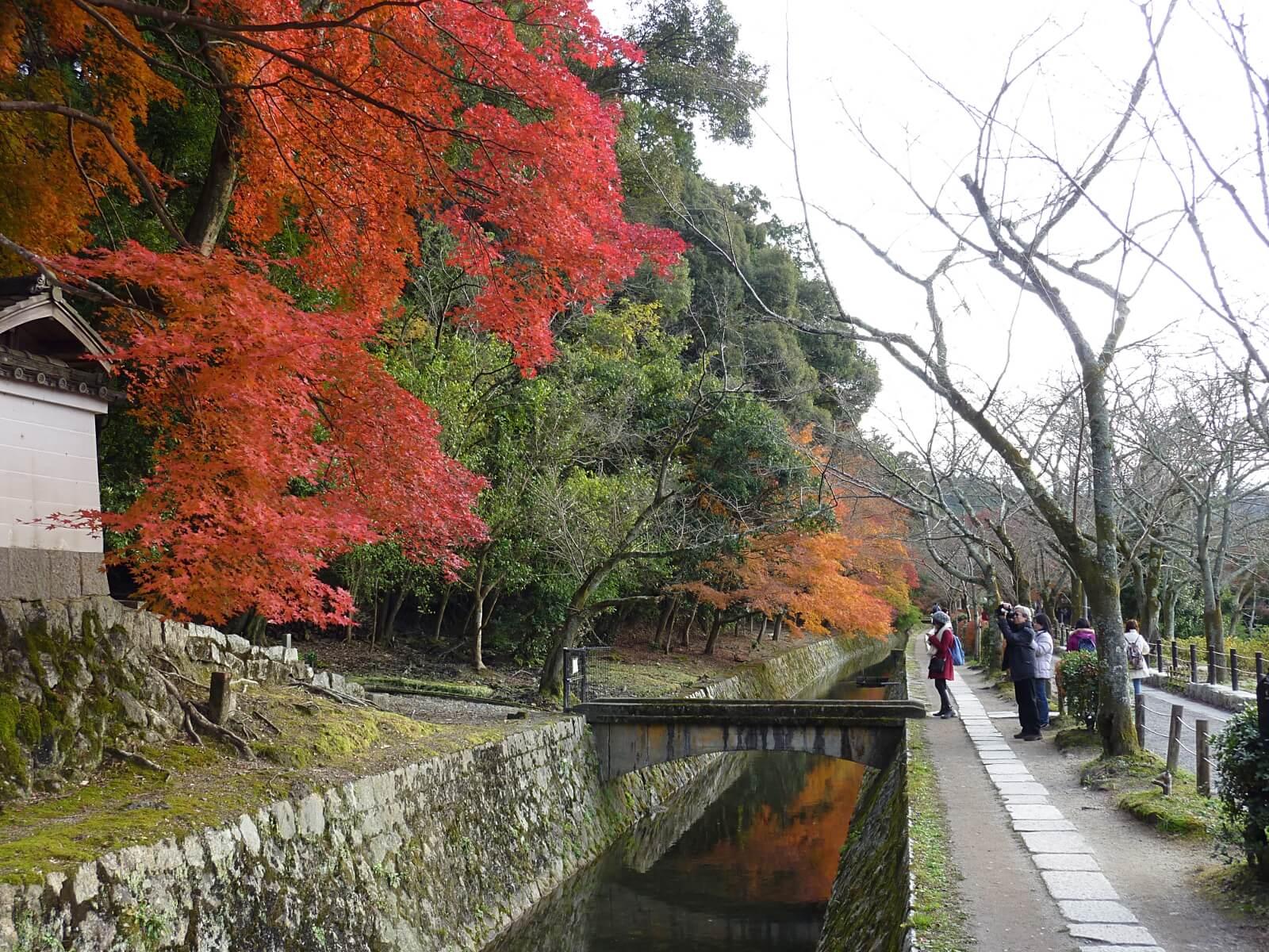 遊歩道に咲く紅葉
