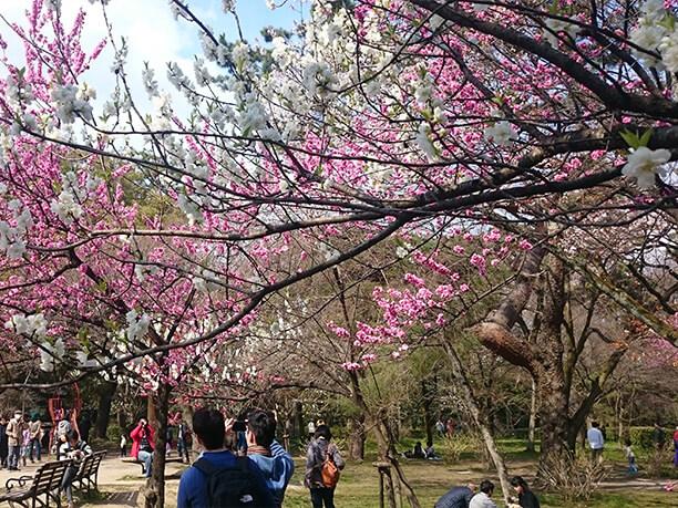 春の京都御苑