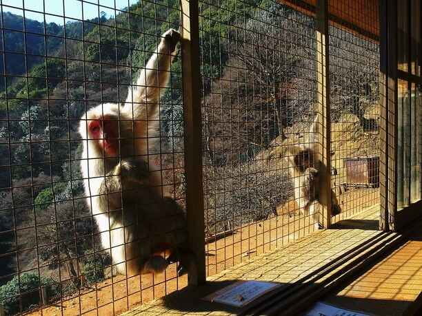 フェンスの外のお猿さん