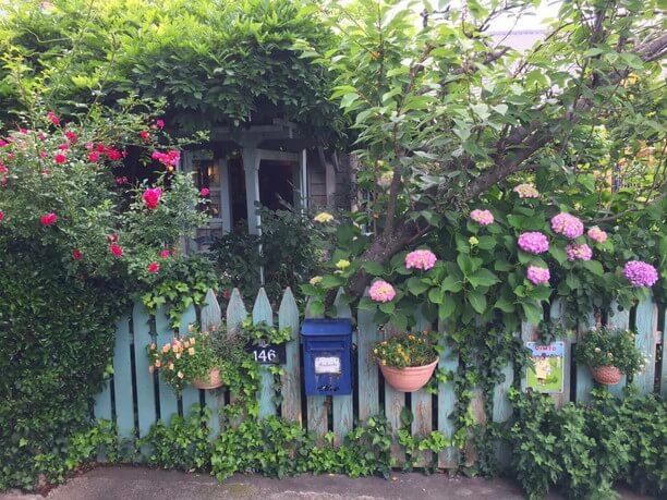 イングリッシュローズや紫陽花