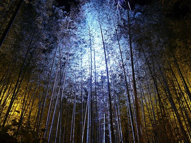 ライトアップされた竹林の小径