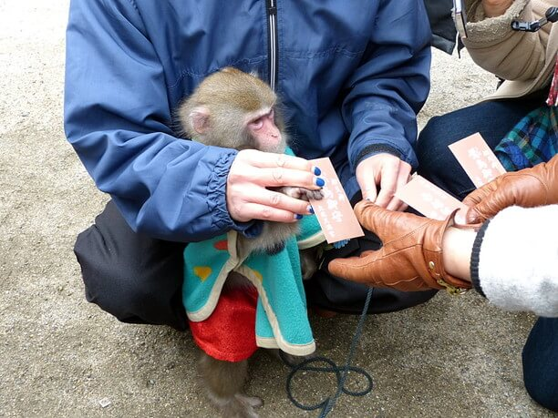 猿回しのお猿さん