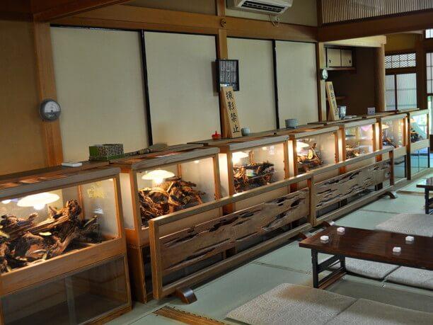 約6000匹の鈴虫が飼育されている書院