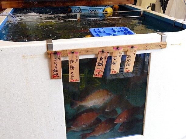 いけすの中の魚