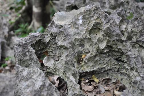 大石林山の石②