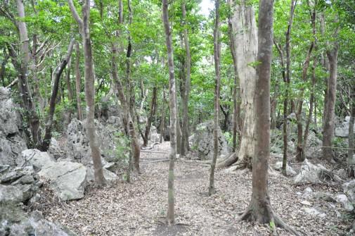 大石林山の林
