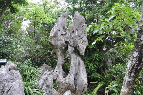 大石林山の石⑦