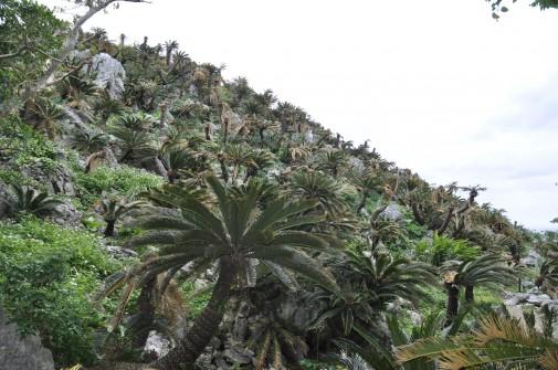 大石林山の緑