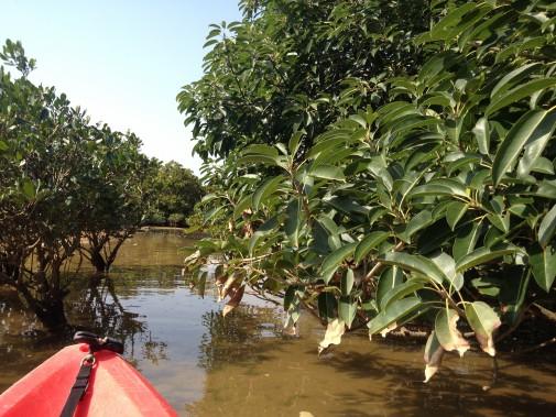 川の写真4