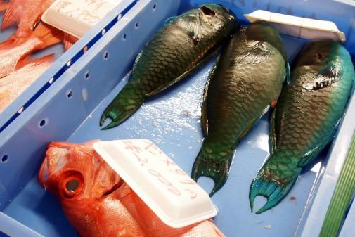 魚のばら売り2