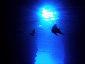 青の洞窟サムネイル