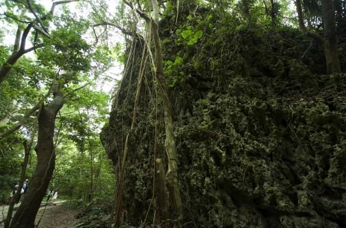 斎場御嶽の自然