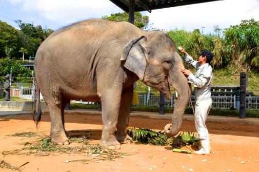 象をきれいする飼育員
