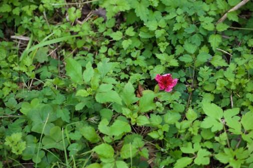草木に生える花
