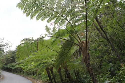 やんばる学びの森への自然な道