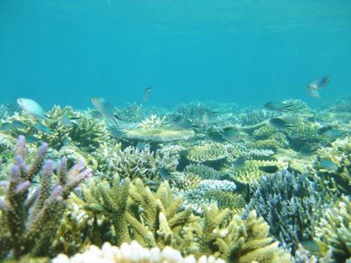 明るい海底