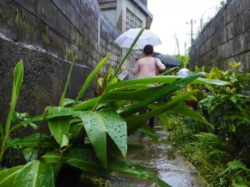 雨の日の小道