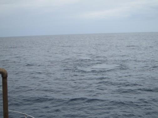 クジラが出てきそうな海