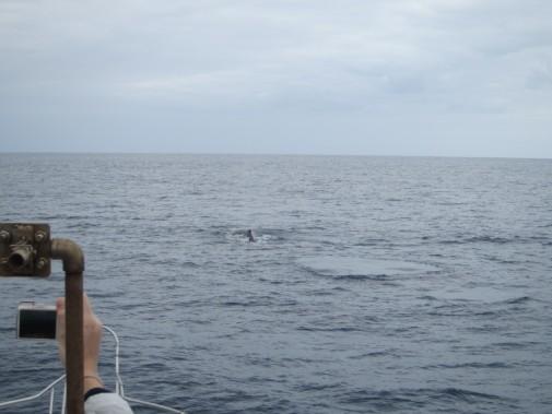 クジラが出てきそうな海_02