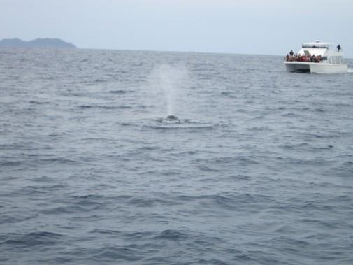クジラがもぐった水しぶき