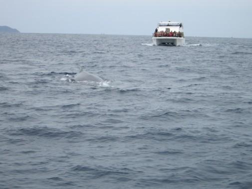 クジラがもぐった水しぶき_02