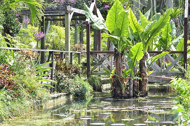 東南植物楽園2