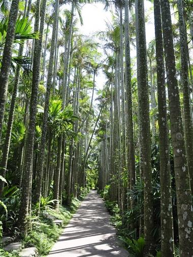 東南植物楽園3