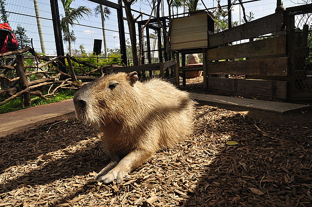 「東南植物楽園 動物 フリー画像」の画像検索結果