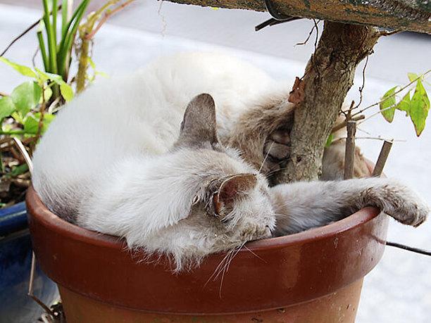 南窯(フェーヌカマ)の飼い猫