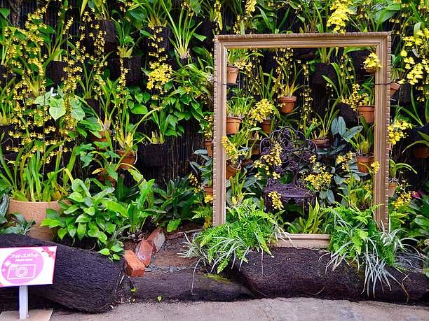 熱帯の水生植物たち