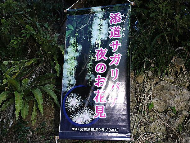 宮古島環境クラブさんによる 「サガリバナ夜のお花見会」