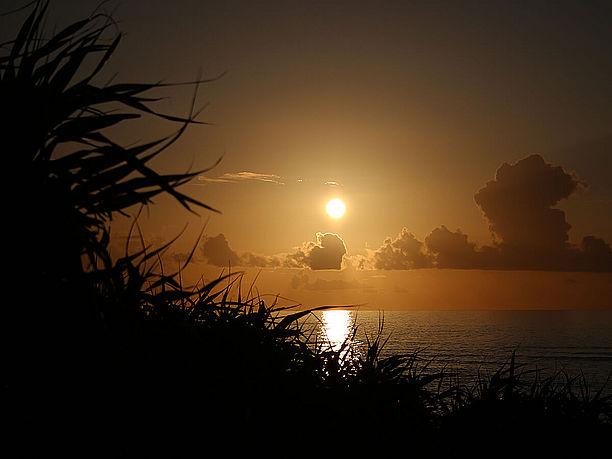 アダンの茂みと夕日