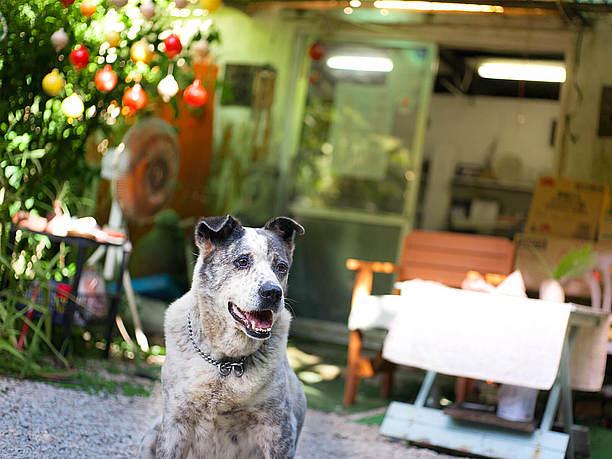 看板犬の「ジン」